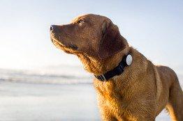 También se están creando collares para perro con wifi.
