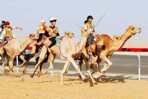 El éxito en esta clonación ofrece un medio para preservar la genética de los camellos emiratíes más valiosos, utilizados en carreras.