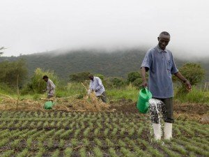 """""""La producción mundial de alimentos tendrá que ser un 70 % mayor que la actual para cerrar el déficit entre la oferta y la demanda"""""""