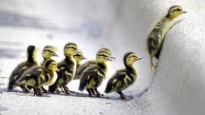 Personas que se ven como líderes pueden tener problemas trabajando juntas.