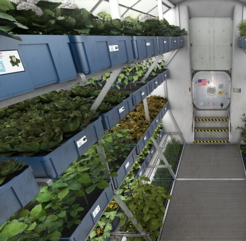 Space-Grown-Vegetables