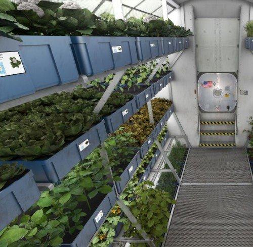 Space-Grown-Vegetables